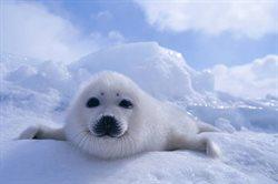 Najdziksza Arktyka