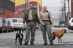 Policja dla zwierząt w San Francisco