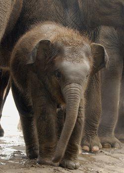 Najmłodsi w zoo