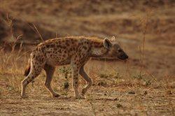 Najgroźniejsze zwierzęta Afryki