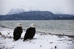 Ekstremalna Alaska