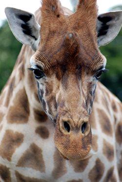 Dublińskie zoo
