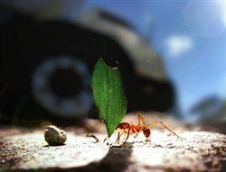 Wojna mrówek