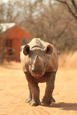 Sierociniec dla nosorożców