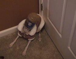 Niegrzeczny pies