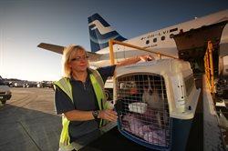 Lotnisko pełne zwierząt