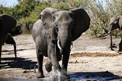 Afryka _ wyprawa na safari
