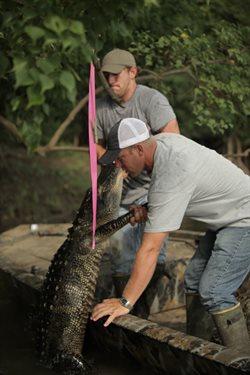 Łowcy aligatorów