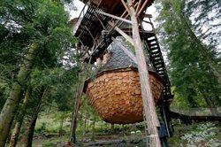 Traumhaus Baumhaus _ In der Höhe eine Hütte