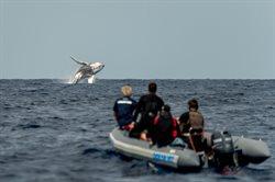 Weterynarz oceanów