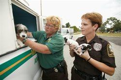 Policja dla zwierząt w Miami