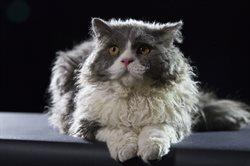 Wszystko o kotach _ małych i wielkich