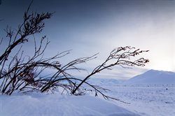 Wielka dzika Północ