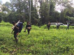 Nosorożce z Sumatry