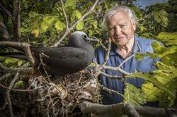 Wielka Rafa Koralowa z Davidem Attenborough