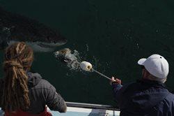 Rekiny atakują