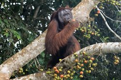 Borneo: sekretne królestwo