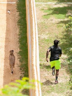 Człowiek kontra gepard