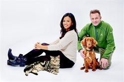 Koty kontra psy