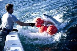 Zaklinacze rekinów