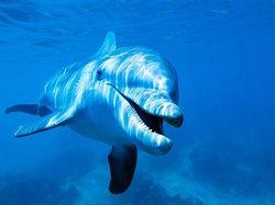 Niezwykłe delfiny