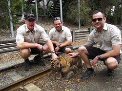 Tygrys _ cudowne zwierzę