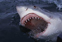 10 najgroźniejszych zwierząt świata