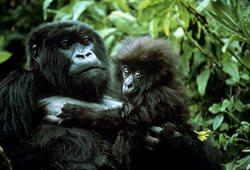Od małpy do człowieka