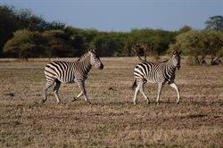 Wielkie migracje zwierząt