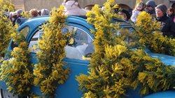 Mimose _ die Frühlingsbotin