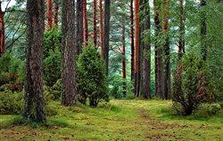 Lasy Dolnego Śląska