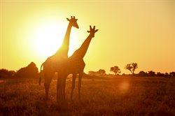 Najgroźniejsi mieszkańcy Afryki