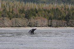 Wśród wielorybów z Nigelem Marvenem