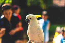Nowojorskie zoo _ Bronx
