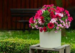 Przepis na ogród