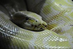 Węże w mieście