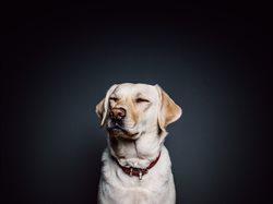 Sekretne życie psów