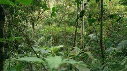 Planeta lasów