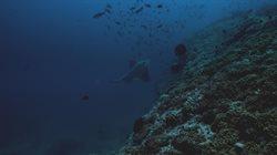 Morze Arabskie