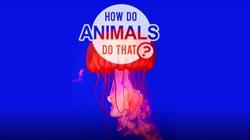 Jak to robią zwierzęta?