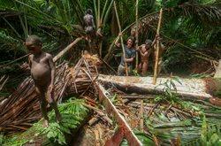 West-Papua _ Mein Jahr bei den Korowai