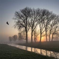 Dzika Holandia