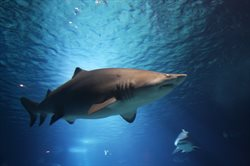 Relokacja rekinów