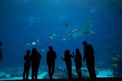 Podwodny świat z bliska