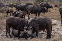 Zabójcze królestwo Afryki
